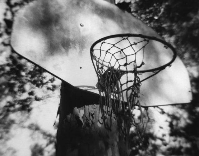 basketball hoop on sycamore tree